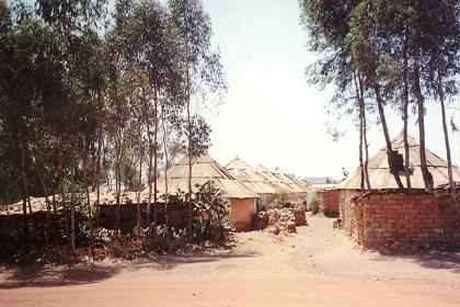 Traditional houses (Agdos) - Haz Haz Asmara.